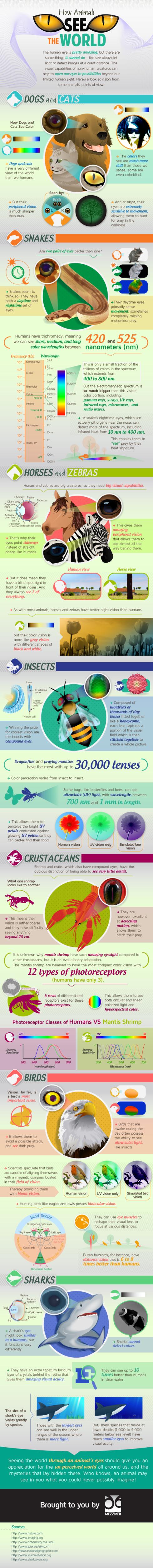 Jak vidí zvířata - infografika