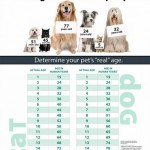 Mazlíčci stárnou rychleji – infografika