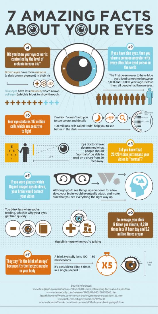 7 zajímavostí oči infographic