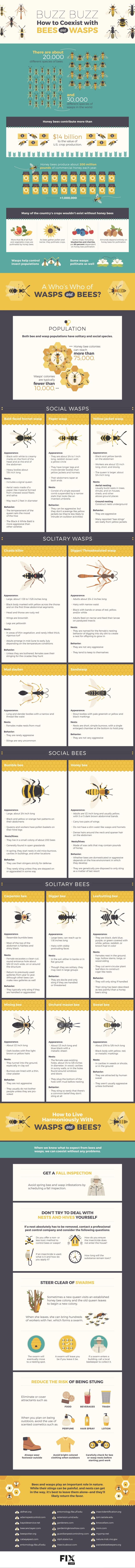 včely a vosy infografika