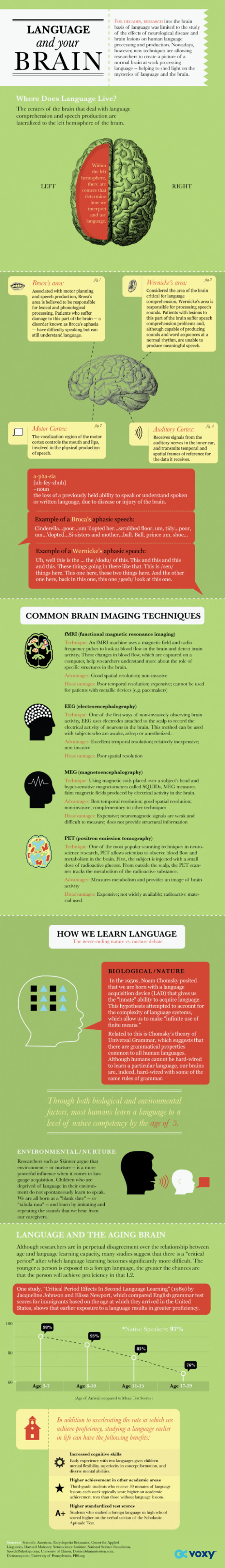 Cizí řeči a náš mozek – Infografika