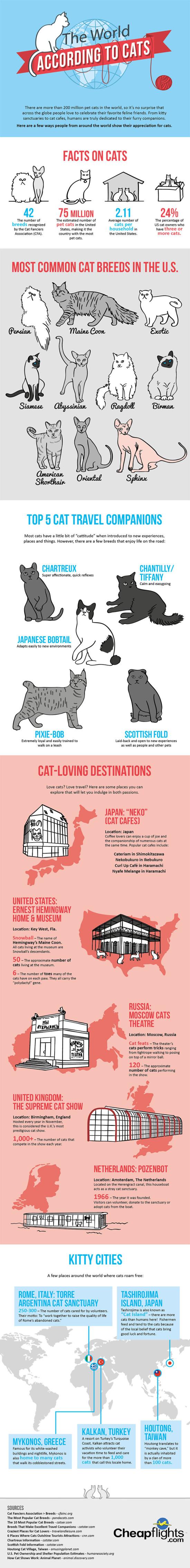 Svět podle koček – Infografika