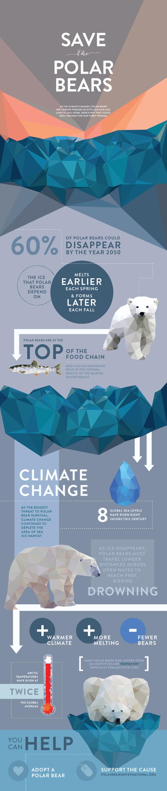 Zachraňte lední medvědy – Infografika