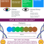 Jaká tajemství skrývají barvy našich očí? – Infografika