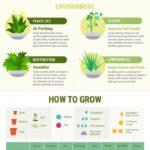 12 rostlin, které si můžete vypěstovat doma – infografika