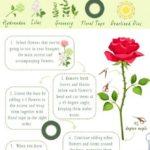 DIY svatební kytice – infografika