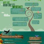 Fakta o deštných pralesích – infografika
