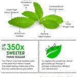 Sladká fakta o stévii – infografika