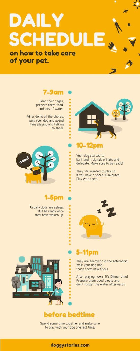 Jak se postarat o domácího mazlíčka.